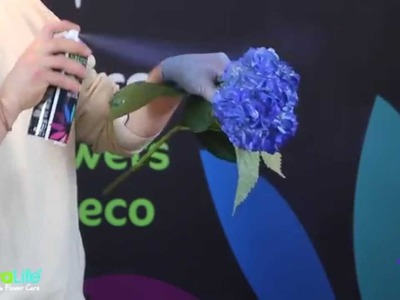 Floralife® Aqua Color Spray - How To: Flowers