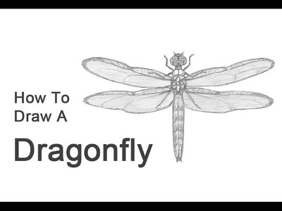 How to Draw a Dragonfly