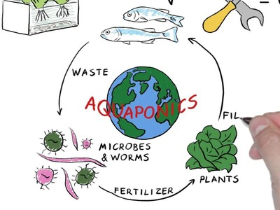 DIY Aquaponics-Learn how to build your system today!