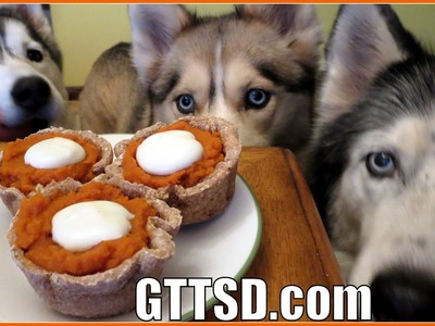 PUMPKIN PIE FOR DOGS | Dog Treat Recipe for Thanksgiving DIY | Snacks with the Snow Dogs 29