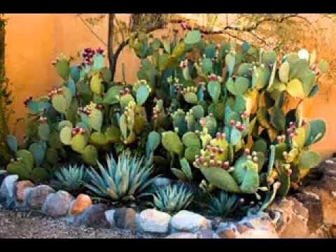DIY Cactus garden decorating ideas