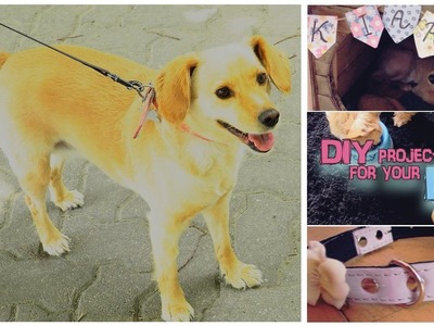 Easy DIY for your DOG | PET decor.accessory