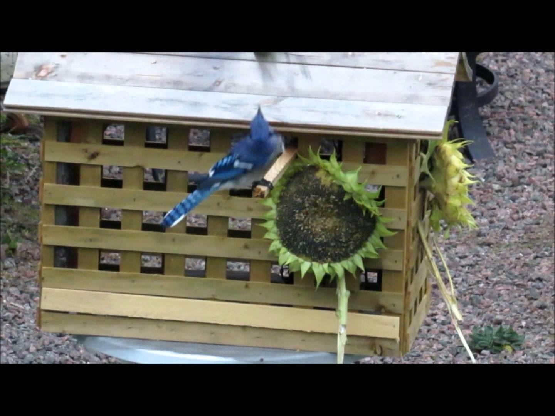 DIY.  Bird feeder house for small birds only!