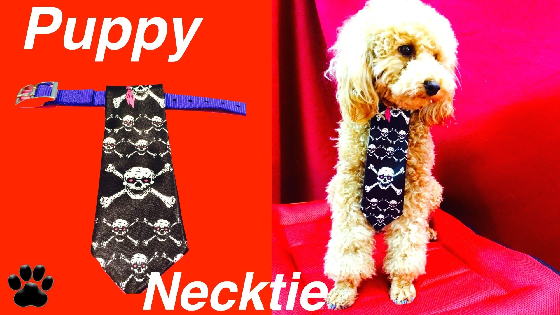 CHRISTMAS DOG TIE - Festive Xmas Formal Neck Tie - DIY Dog Craft by Cooking For Dogs