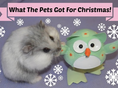 What The Hamsters Got For Christmas | Festive Furry Fun 2014