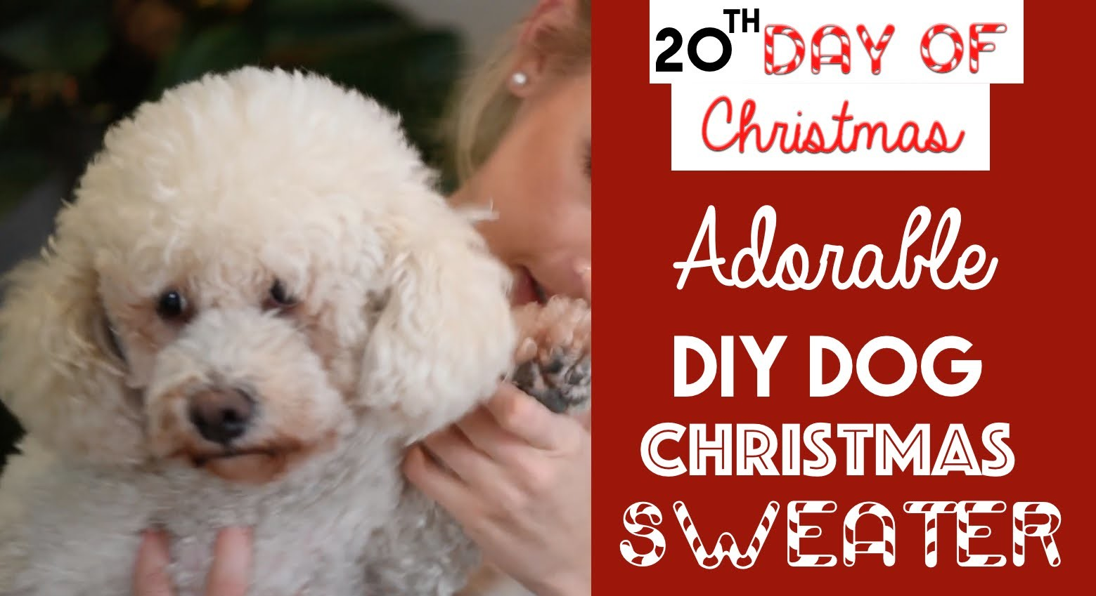 ADORABLE DIY Dog Christmas Sweater | 20th Day of Christmas 2015!
