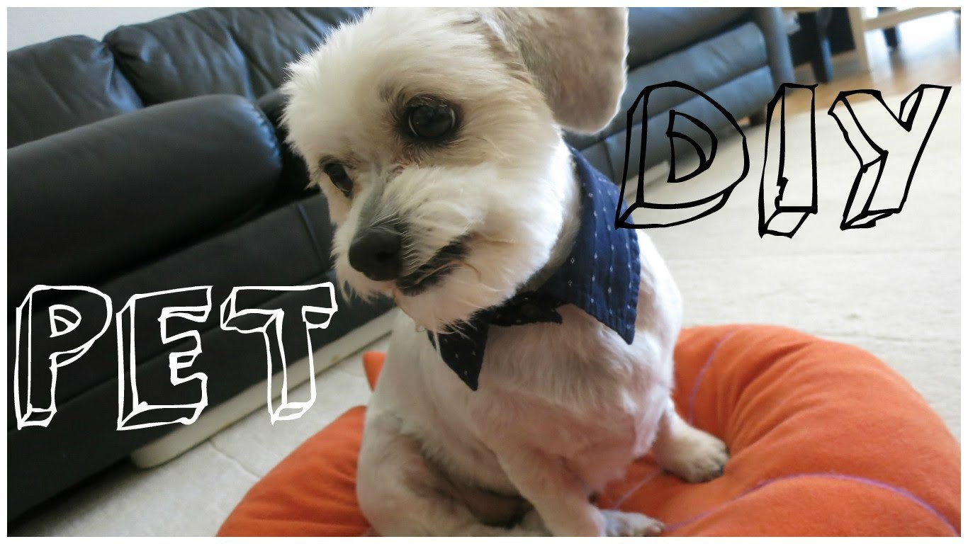 Easy DIY Projects For Dog