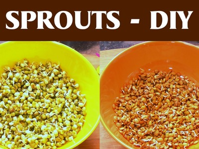Make Sprouts at Home - DIY
