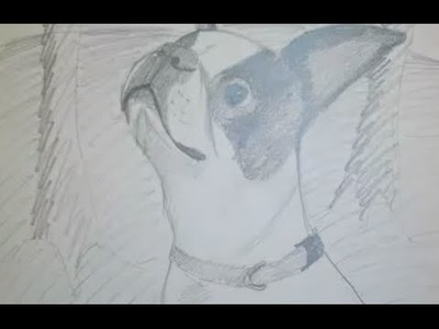 How to Draw a Boston Terrier