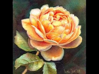 My Roses - Romantic Rose Paintings in Oil and Watercolor by Doris Joa