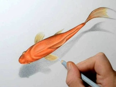 How to Draw a Goldfish - 3D Art Drawing