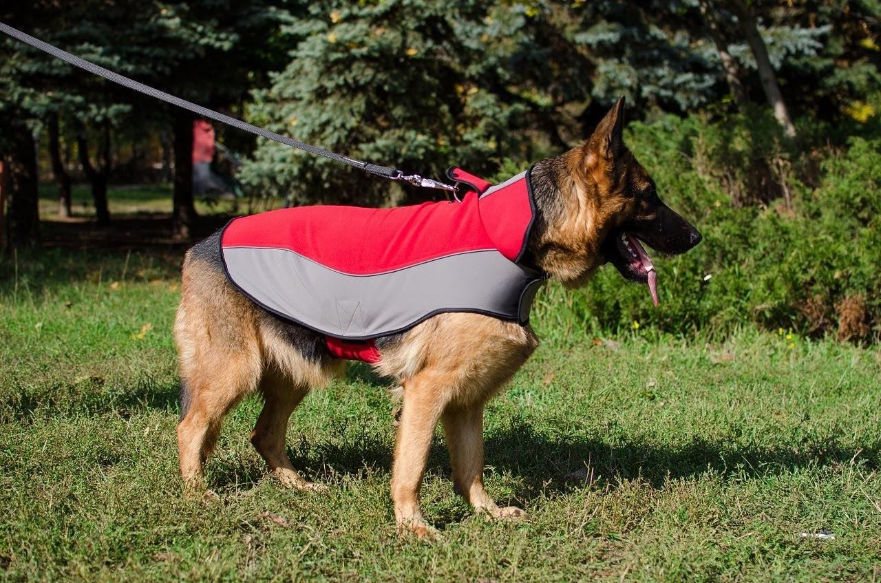 Winter Nylon Dog Coat - Tutorial on How to Measure your Dog