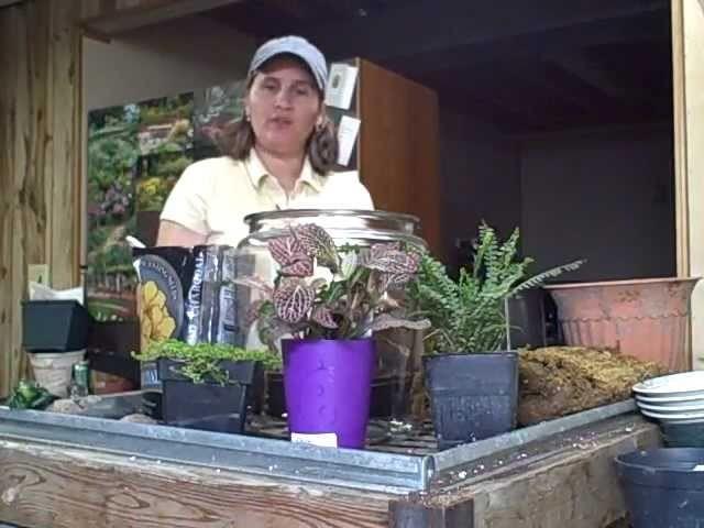 Part 1 How to Make or Create a Indoor Terrarium Garden