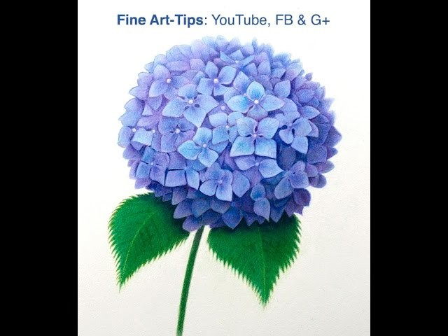 How to Draw a Hydrangea With Color Pencils - How to Draw a Purple Flower