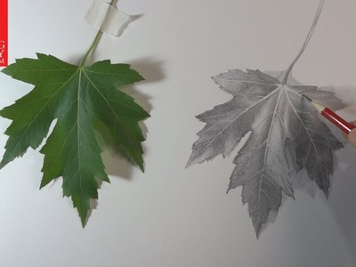 How to Draw a Leaf presented by Drawing Academy .com 28