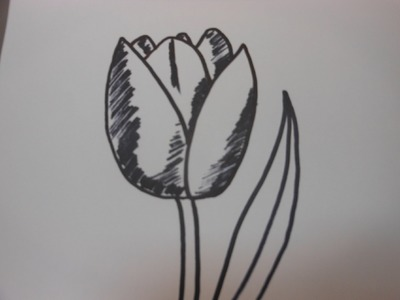 How to draw a tulip - Step by step tutorial