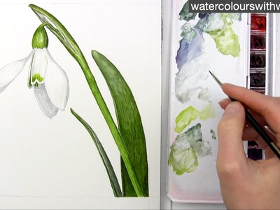 How to paint a realistic white snowdrop flower in watercolor by Anna Mason