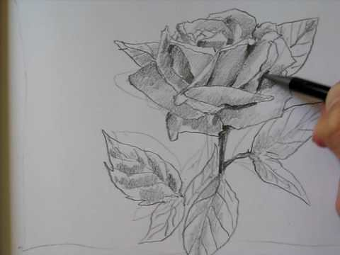 Draw A Rose II