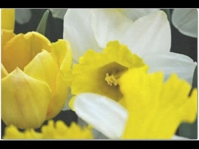Crepe paper DIY - Beautiful flowers making with paper Narcissus