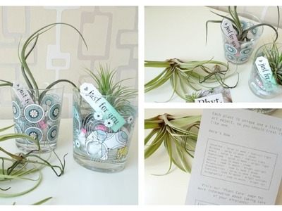 DIY Airplant Gift Set With Phyt