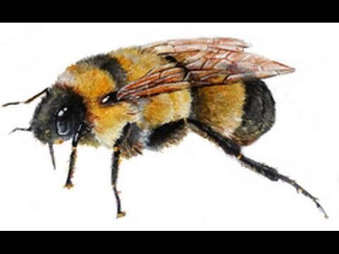 Painting a Bumble Bee with Acrylics Speed Paint. Tutorial