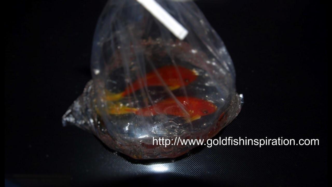 3D Goldfish Paint in a Plastic Bag Tutorial