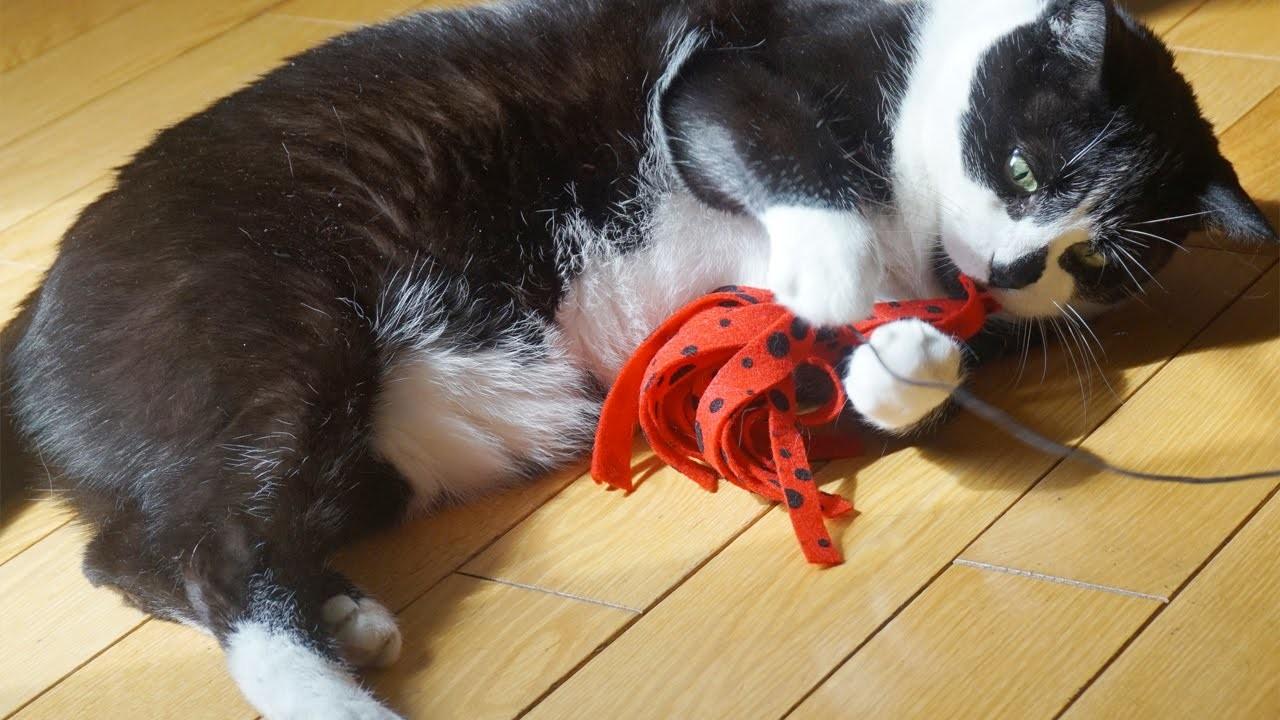 DIY: Cat Toy
