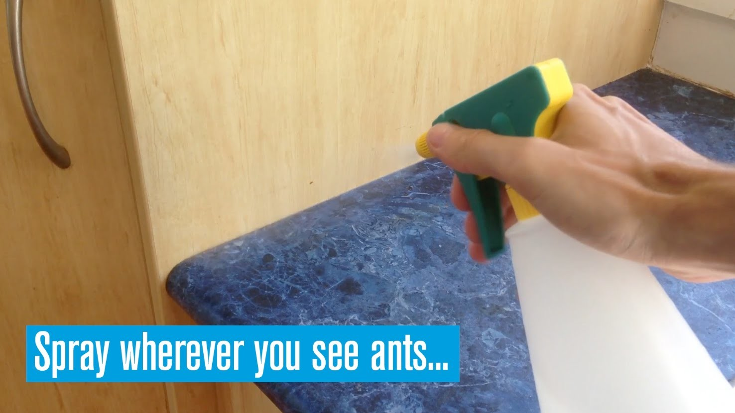 How To Deter Ants With Eco-Friendly Spray