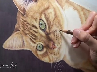 How to Draw a Cat in Colored Pencil | Tutorial