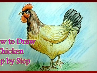 How to Draw a Chicken Step by Step