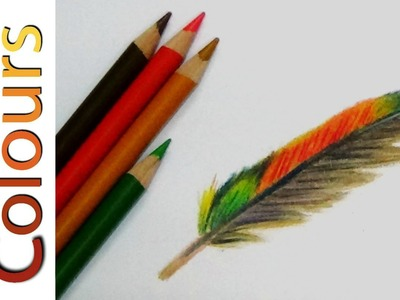 How to draw a feather in colored pencils