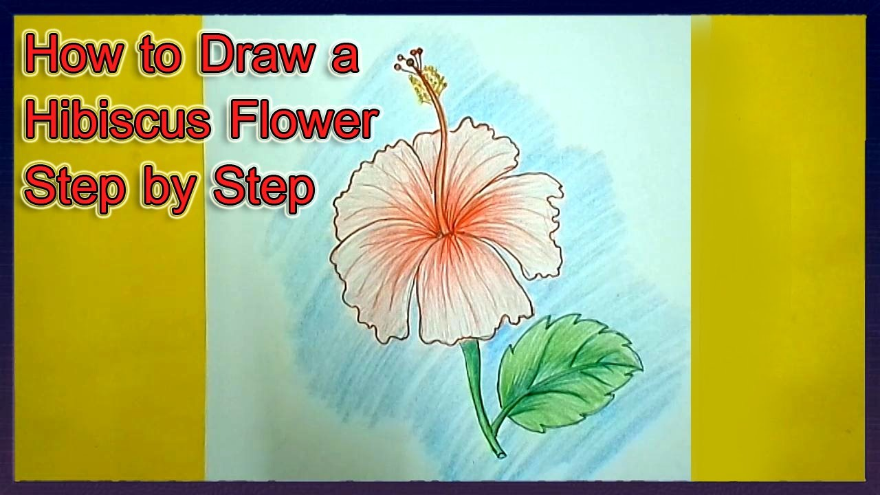 How to draw a hibiscus flower step by step how to draw a hibiscus flower gypz og izmirmasajfo