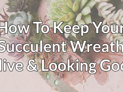 How To Keep Your Beautiful Succulent Wreath Alive & Looking Good