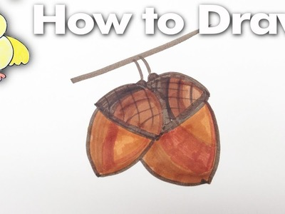 How to Draw Easy Acorns