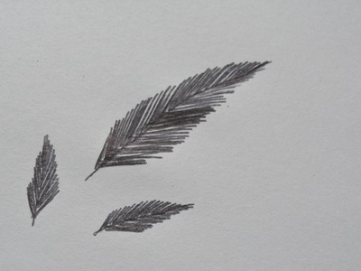 How to Draw Simple Feathers