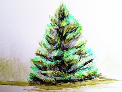 How to paint realistic tree with watercolor pencils, Step By Step, Narrated Full Time Video