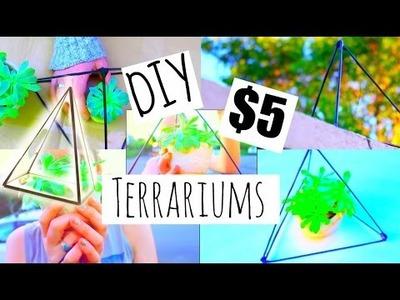 DIY $5 NO GLASS TERRARIUMS