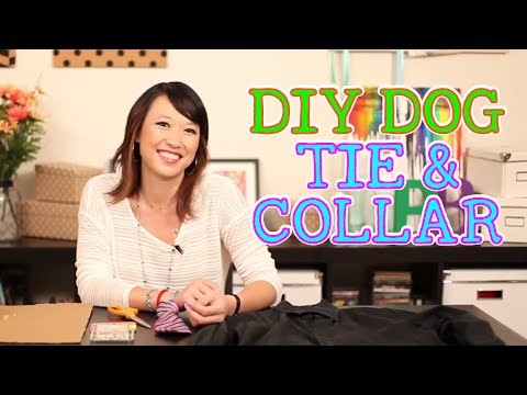 DIY Dog Tie and Collar - Pinbusters Episode 21