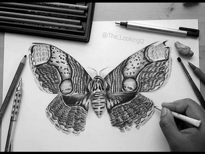 How to Draw a Brahmin Moth