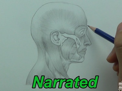 How To Draw The Human Head - Anatomy Drawing (Narrated)