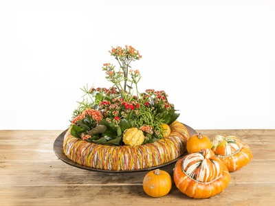 Kalanchoe Pumpkin Ring | Flower Factor How To | Plant Creation