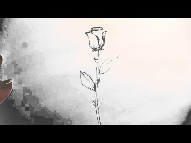 How to Draw a Long-Stem Rose