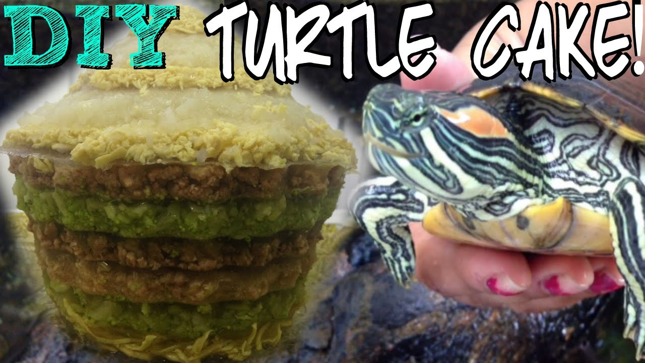 How i made my turtle's birthday cake! diy