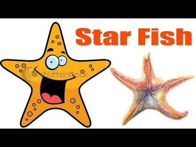 How To Draw Star Fish | Creative Art Work | Easy Drawing Steps