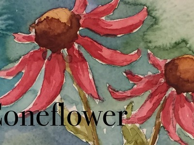How to paint a coneflower flower in watercolour watercolor