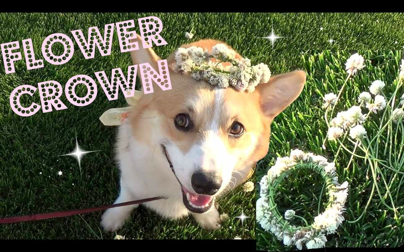 ♥ DIY ♥ Flower Crown for You & Your Pet!