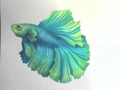 Betta Splendens watercolour painting