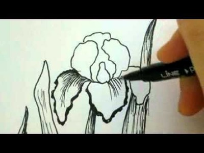 How To Draw Flowers - Iris Flower