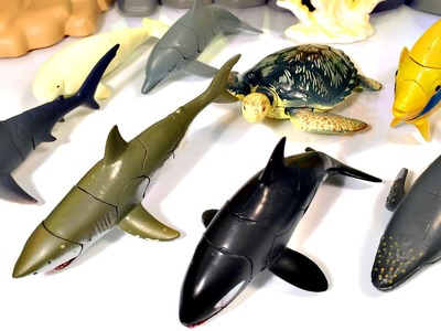 11 GORGEOUS SEA ANIMALS SURPRISE TOYS 3D PUZZLES - Hammerhead Shark Whale Manta Ray Beluga Turtle