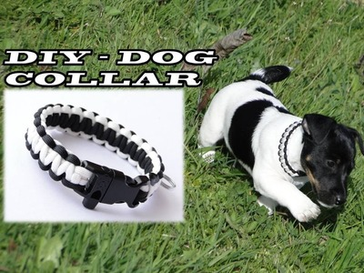 """How to Make a Paracord Dog Collar –Featured: Jack Russell Terrier """"Archie"""""""